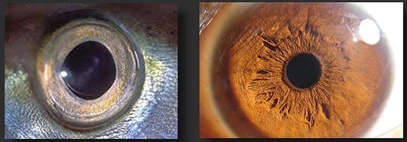 攝影美學:光線與視覺演化