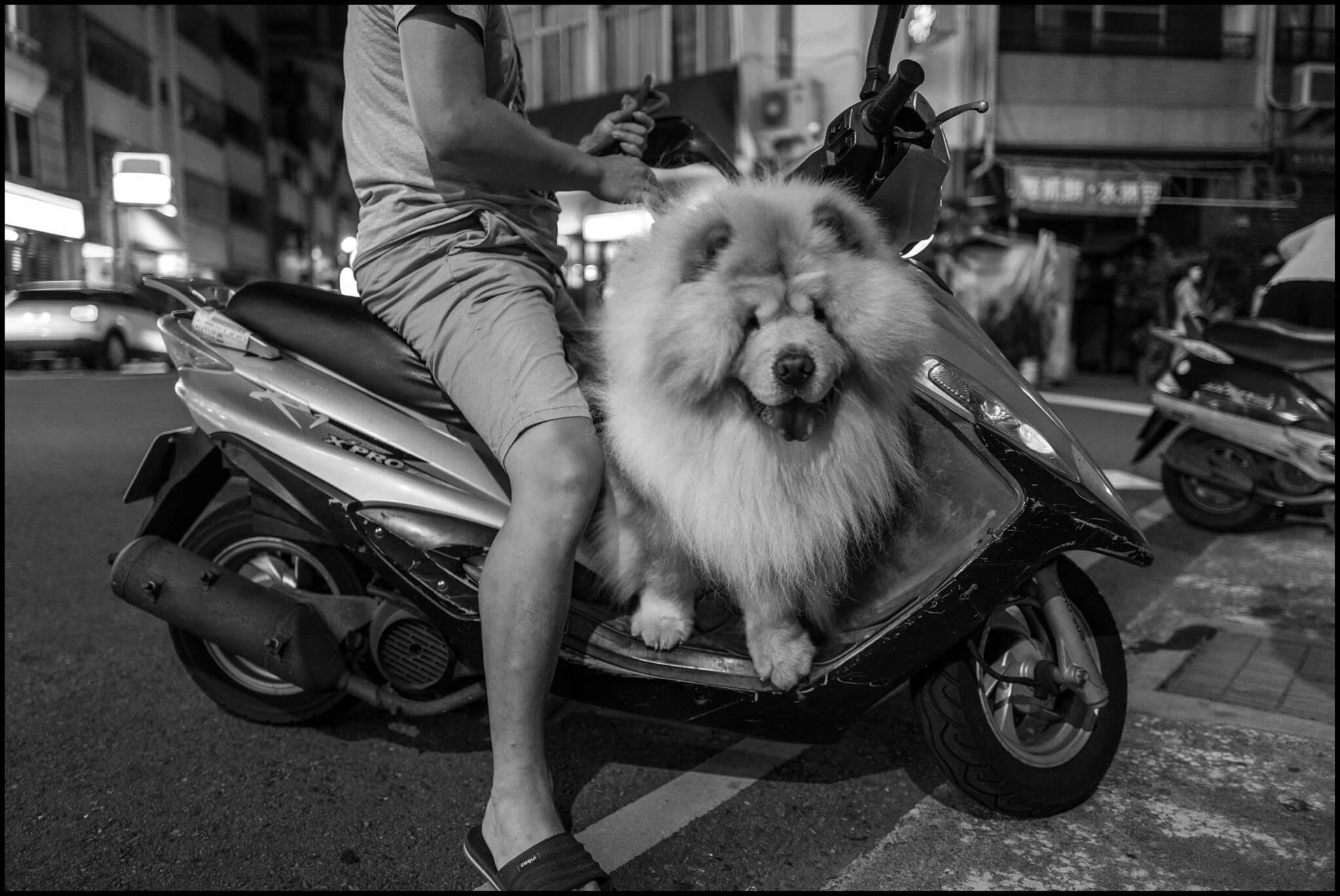 Leica-dog2