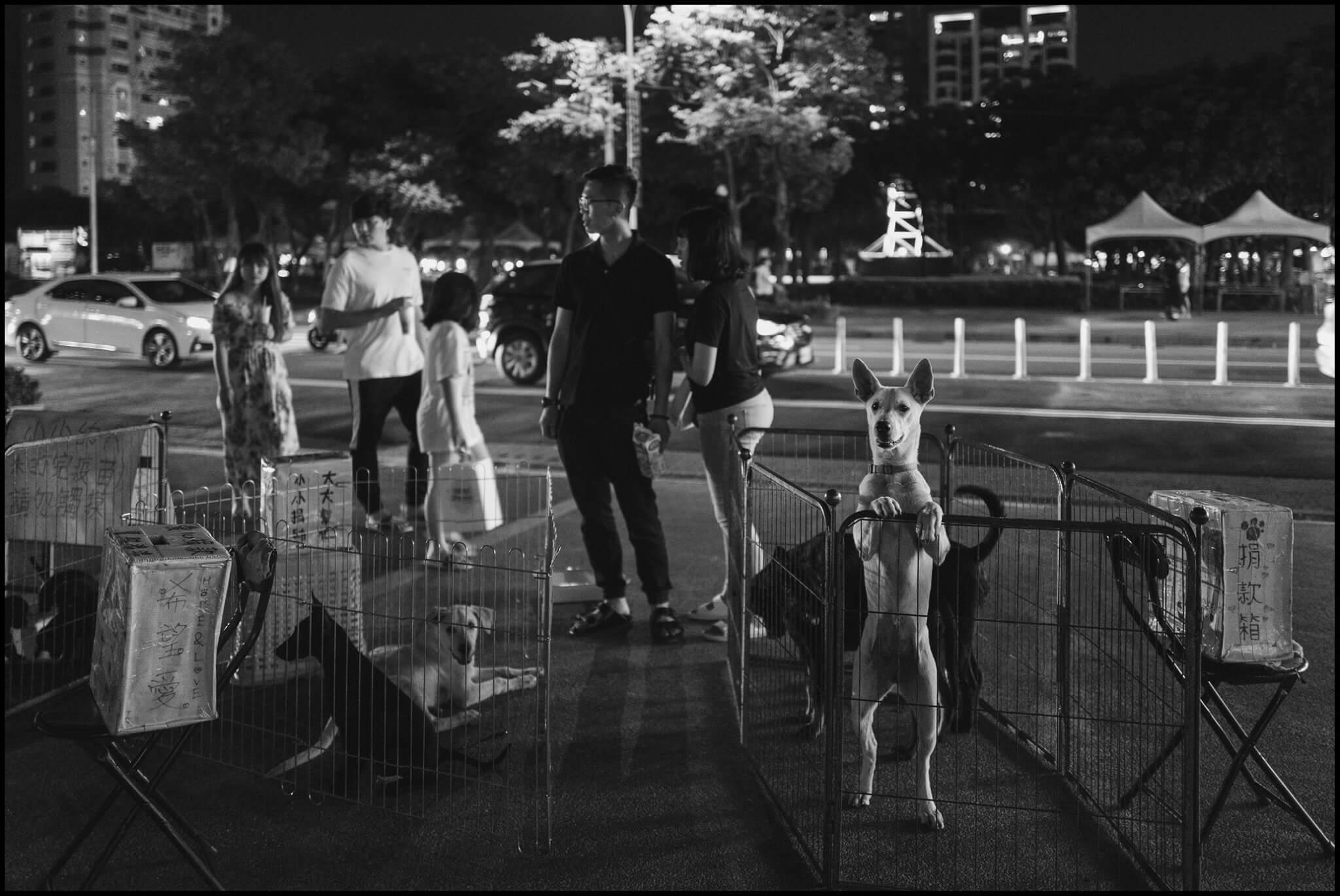 Leica-dog3