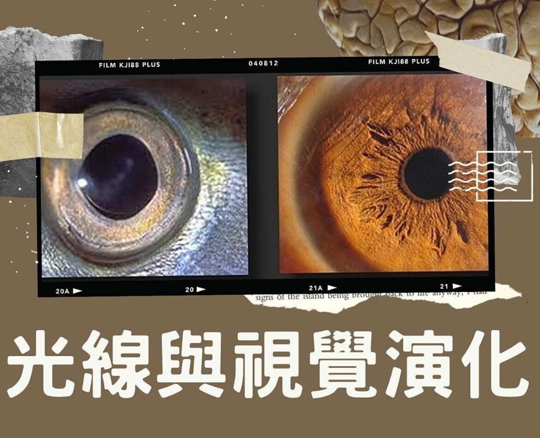 視覺知識:光線與視覺演化(2021)
